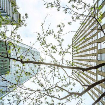Rising Demand for Bangkok Condominiums and Apartments